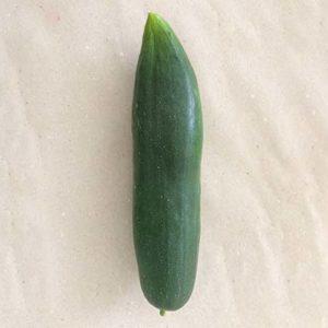 concombre-rustique